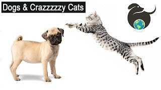 Crazy Cats and Funny Dogs Compilation | Cats VS Dogs