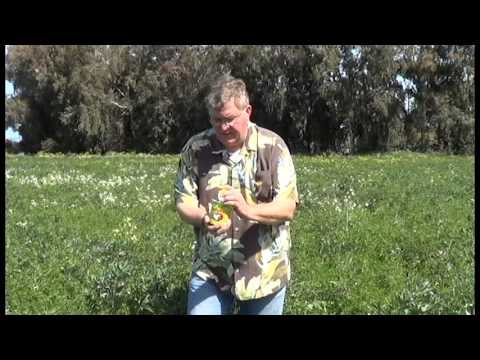 Natural Pest Control with Ladybugs