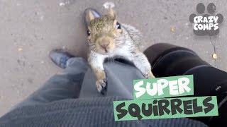 Squirrels are Jerks Compilation 2018 - Funny Squirrel Videos 😂