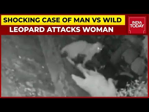 Shocking Case Of Man Vs Wild: Leopard Attacks Woman In Mumbai, Incident Caught On CCTV Camera