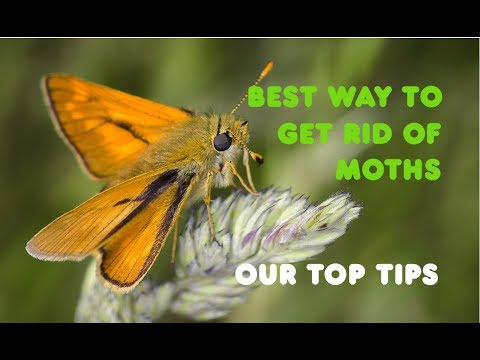 Tips For UK Moth Control From Pest Exterminators