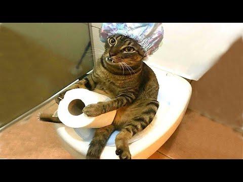 Смешные видео с котами , собаками и другими животными