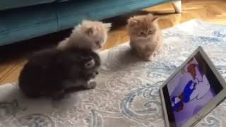 the funniest and cutest cat and dog compilation 2019