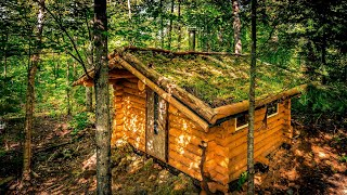 Off Grid Sauna in the Forest | Living Green Roof and Log Cabin Walls | 4K