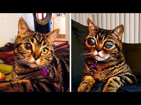 Глаза Этой Кошки не Переставали Расти, Тогда Выяснилась Реальная Причина