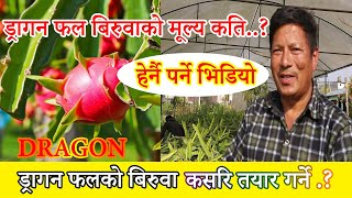 Dragon Fruit ड्राइगन  फलको बिरुवाको मुल्य कति..? हेर्नोस.. आफैँले पनि उत्पादन गर्न  सकिन्छ बिरुवा.।
