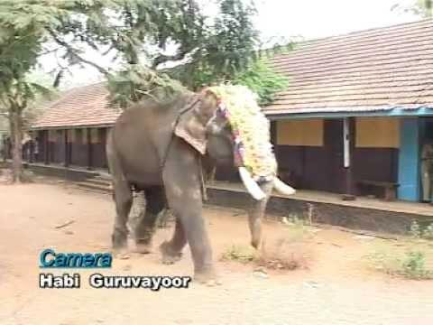 Kerala Elephant Attack Youtube