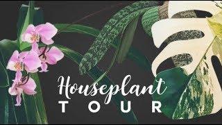 HOUSEPLANT TOUR 🌿 ● Spring 2019 | A Full Tour Of Every Plant I Own