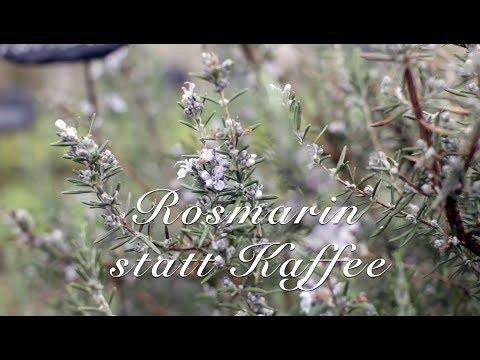 Viriditas Heilpflanzen-Video: Rosmarin statt Kaffee