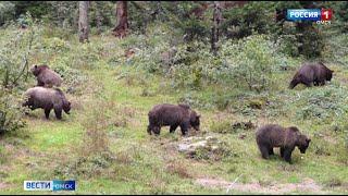 К границе Омска приближаются дикие медведи