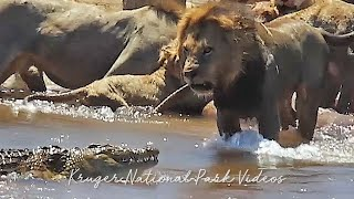 Most Amazing Animal Encounters and Wildlife Sightings of the Year Compilation.