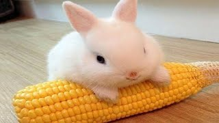 Funny and Cute Baby Bunny Rabbit Videos - Baby Animal Video Compilation (2019)