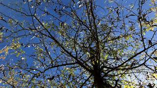Gentle Movements. Relax Music for Meditation, Sleep, Healing Therapy, Yoga - YouTube
