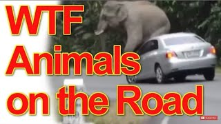 WTF Animals on the Road :( FailTube