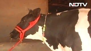 Centre bans cattle slaughter across the nation, Kerala opp..