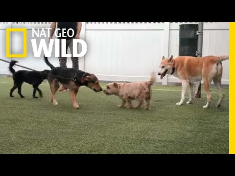 The Importance of Dog Socialization  | Dog: Impossible