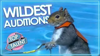 WILDEST ANIMAL Moments & Auditions On Got Talent!   Top Talent