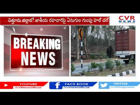Elephants create chaos on national highway in Chittoor
