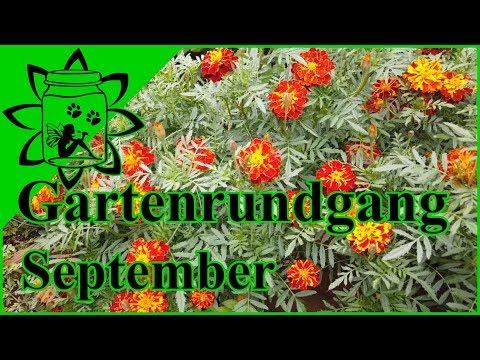 Gartenrundgang September 2019   Was gibt es Neues im Garten   Garteneinkochfee