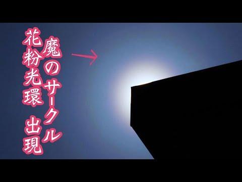 【お天気雑学】魔のサークル 花粉光環 出現