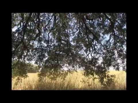 Santuaris - Xavier Canal