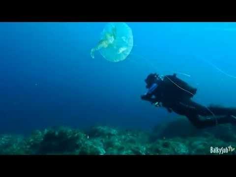 """Diving Paradise """"Otoño en Cabo de Palos"""""""
