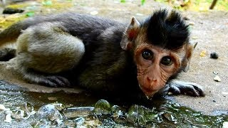 What This Cute Baby Monkey Doing? How Cute Baby Going on?