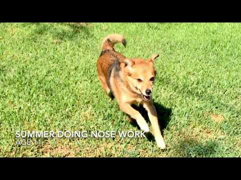 Summer Does Nosework