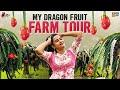 My Dragon Fruit Farm Tour || Dragon Fruit Farming || A wonderful Day in my Life || Its Himaja