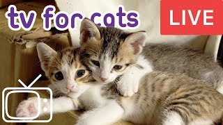 Videos for Cats! Entertainment for Cats with Relaxing Music!