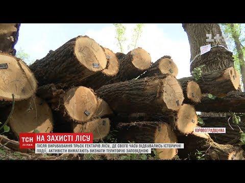 На Кіровоградщині вирубали три гектари лісу неподалік місця історичного бою Миколи Скляра