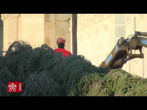 El árbol de Navidad llega a la Plaza de San Pedro