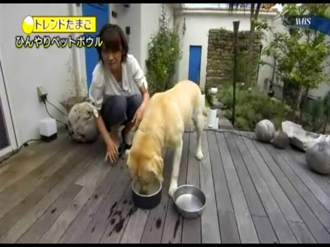 Magisso Happy Pet Project – Big in Japan!