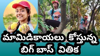 Bigg Boss Vithika climbs mango tree, video goes viral..