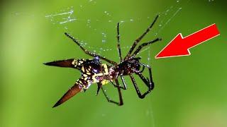 10 Самых невероятных пауков