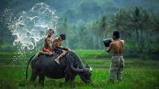 Những hình ảnh thiên nhiên đất nước Việt Nam
