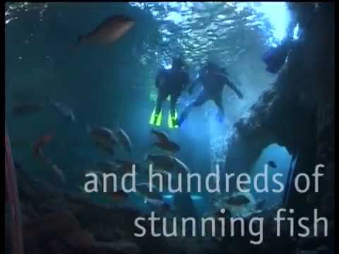 video Dive With Sharks