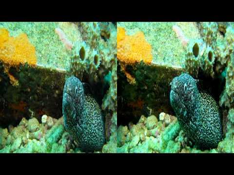 Mergulho em Naufrágio - Wreck dive in Bonaire 3D