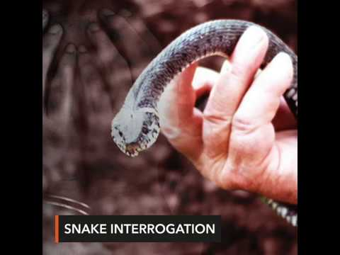Scales of justice: Indonesia police probe snake interrogation