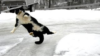 Funny ANIMALS vs. ICE & SLIPPERY FLOOR! - TRY NOT TO DIE from LAUGHING 2019