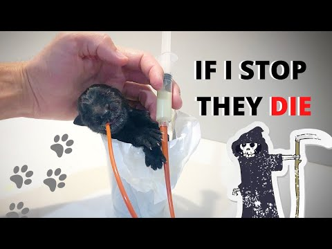 Saving Dying Puppies.