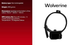 Watch video - GPS Collar for Wolverine