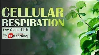 Cellular Respiration 01