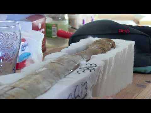 Çankırı'da bulunan 8,5 milyon yıllık fosillerin temizliği için titiz çalışma