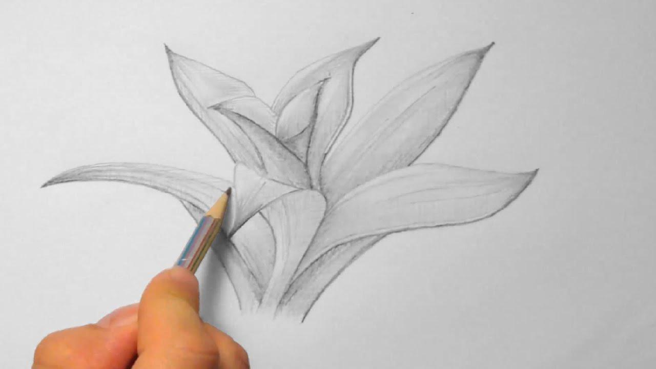 bromelie zeichnen im zeitraffer bromeliad drawing in fast motion hd youtube. Black Bedroom Furniture Sets. Home Design Ideas
