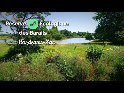 La Réserve Écologique des Barails : le plus grand espace vert de Bordeaux