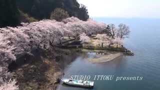 海津大崎の桜 -モーターパラグライダー空撮- by ittokusanfly on YouTube