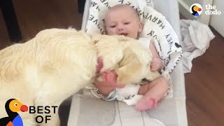 Animal Videos That Will Make You Happy: Funny & Cute Animals 2018   Best Of The Dodo