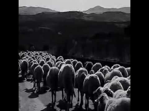Eran cien ovejas