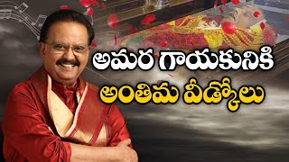 SP Balasubrahmanyam Final Rites LIVE..